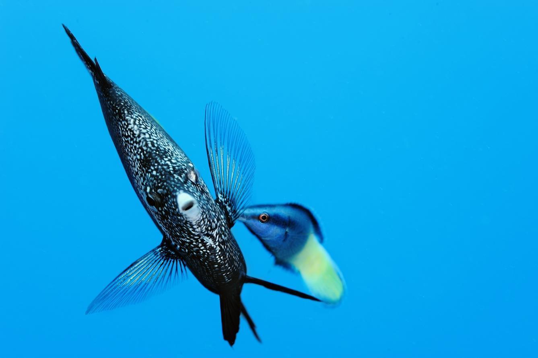 Душа океана. Рыба - бабочка(c)BrianSkerry