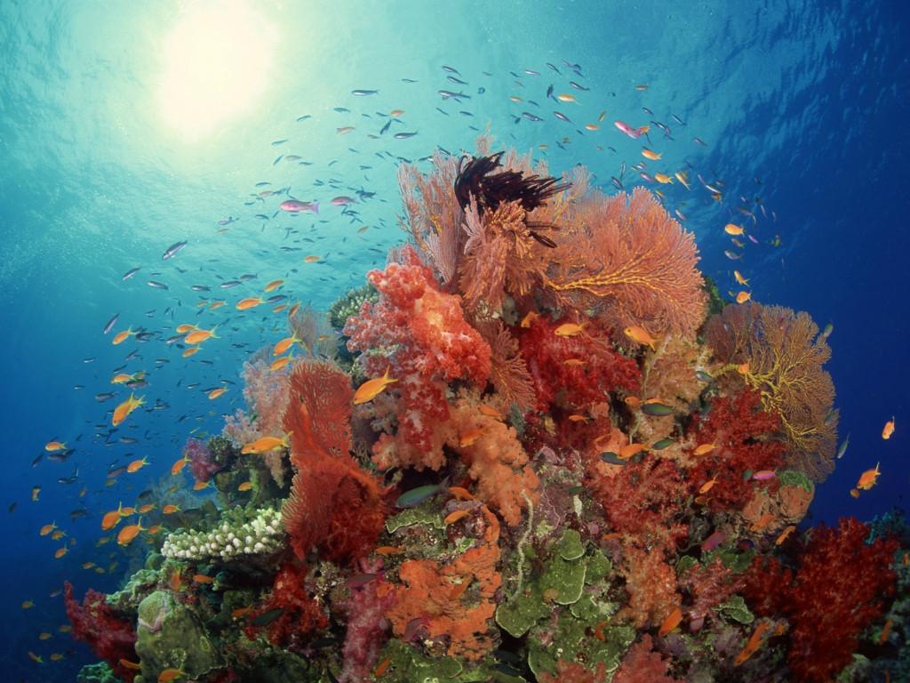 Душа океана. Фотографии Брайана Скерри