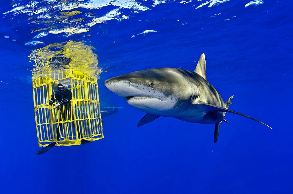 Душа океана. Фотография  Брайан Скерри