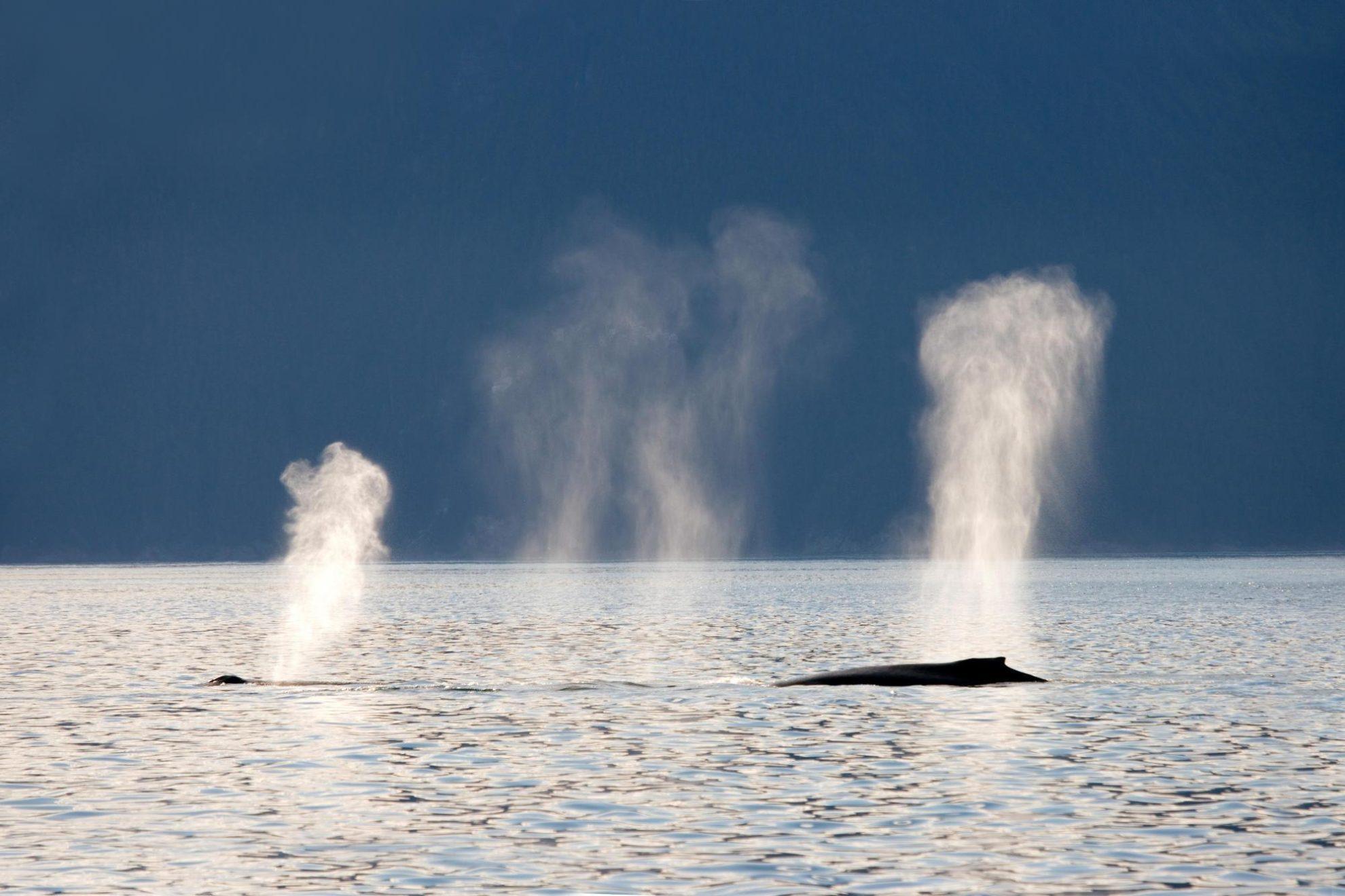 Наблюдение за китами это невероятно интересно.