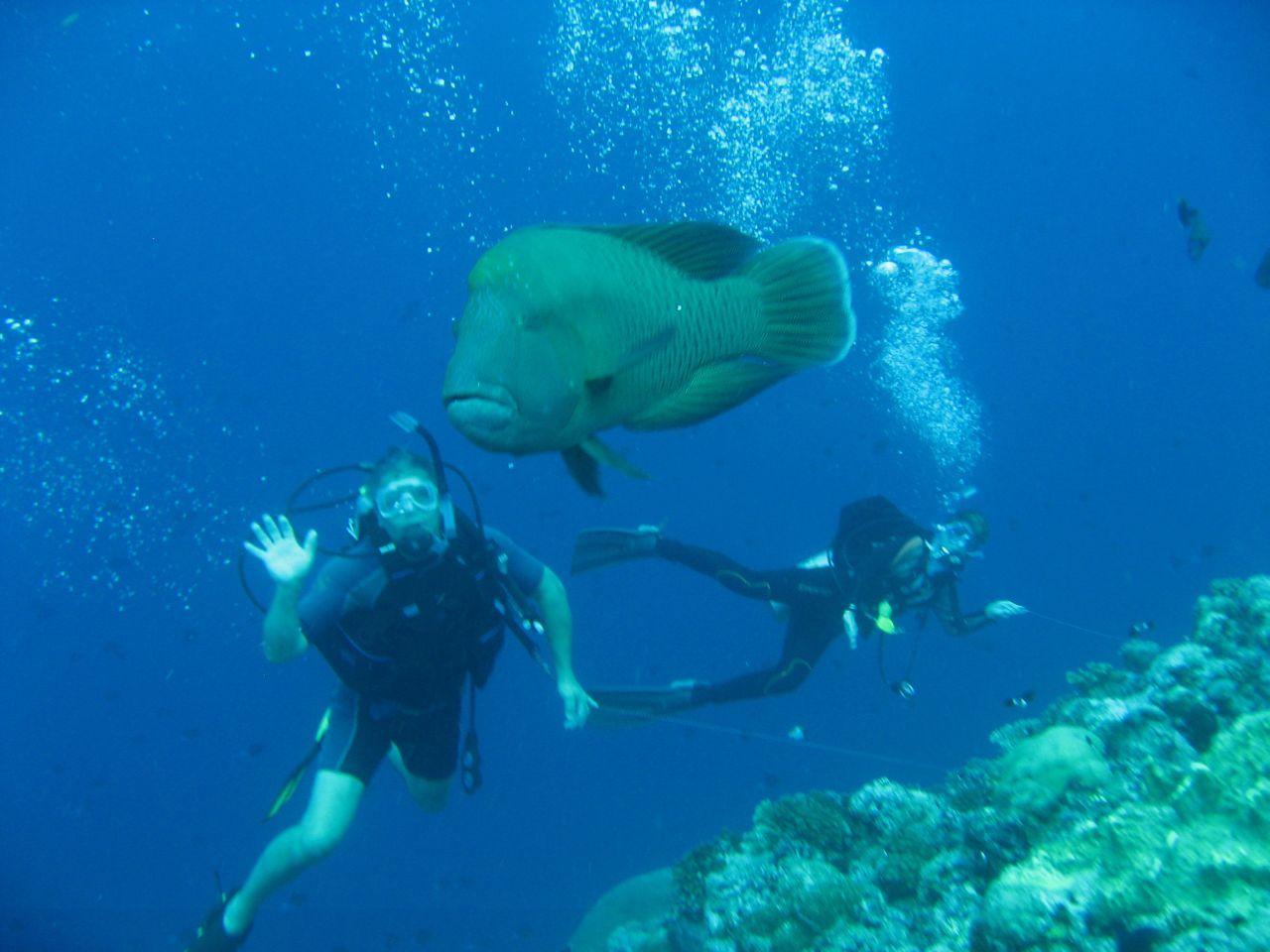 Захватывающие красоты подводного мира на Палау