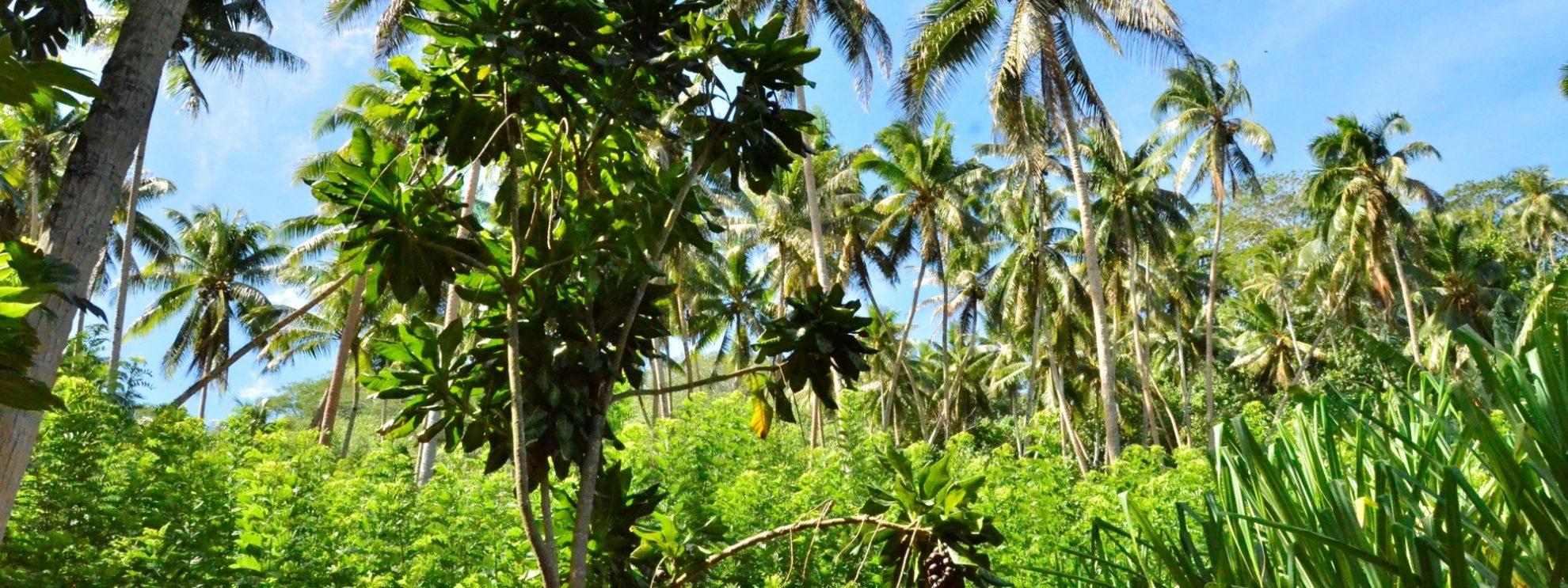 Буйство природы острова Тахаа.