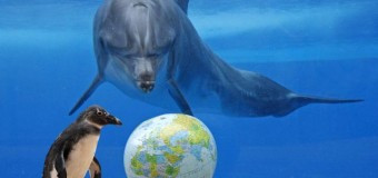 8-го июня во Всемирный день океанов телеканал OCEAN-TV приглашает в гости друзей и партнеров на Ocean party!