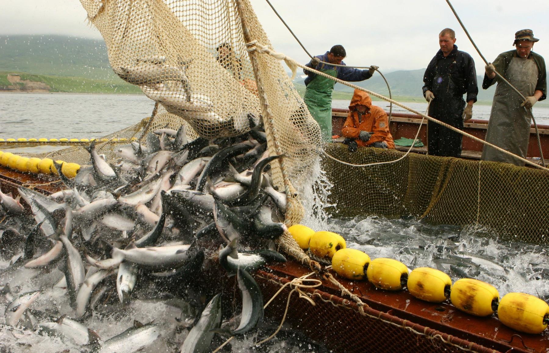 Дрифтерноый вылов рыбы. Фото ТАСС