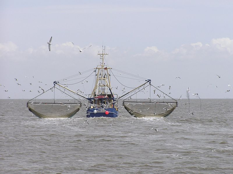 Рыбоконсервная плавучая база. Траулер. Дрифтер (рыболовное судно).