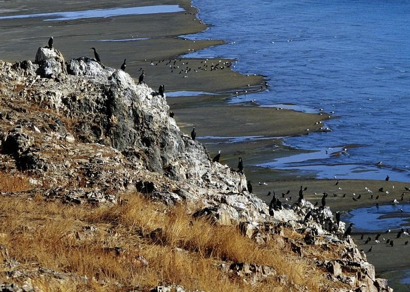 Самое большое соленое озеро – бессточное Цинхайху (Кукунор), находящееся на северо-востоке провинции Цинхай, занимает площадь – 4583 кв. км. Максимальная глубина – до 38 м. Расположено на высоте 3200 м в межгорной котловине.