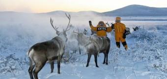 """""""Время Арктики"""": 1 год на благо Северного региона страны"""