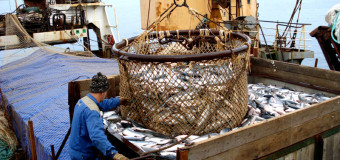 Российскую рыбу проверят на соответствие бразильским стандартам