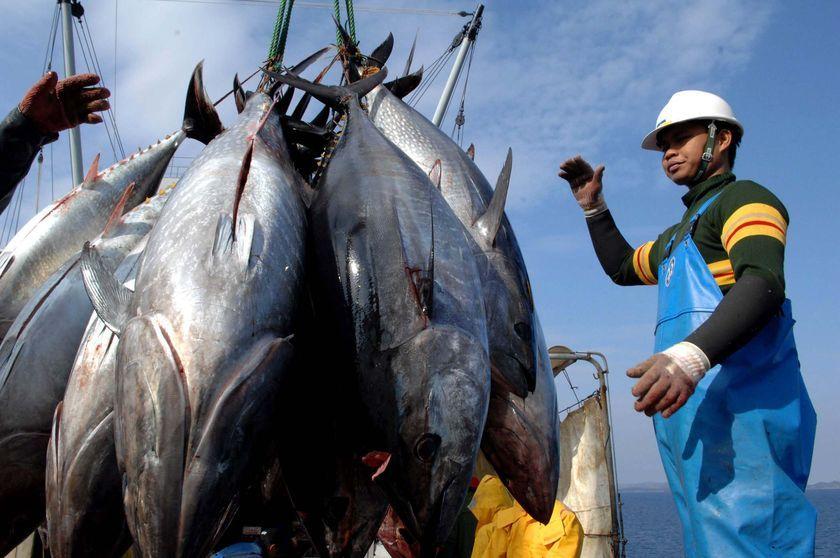 НА 74% снизилась популяция тунца. фото: http://www.thegoodlife.ru/