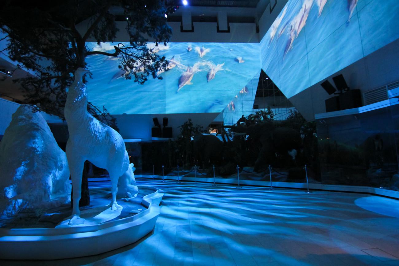 Экспозиция в зале Дарвинского музея
