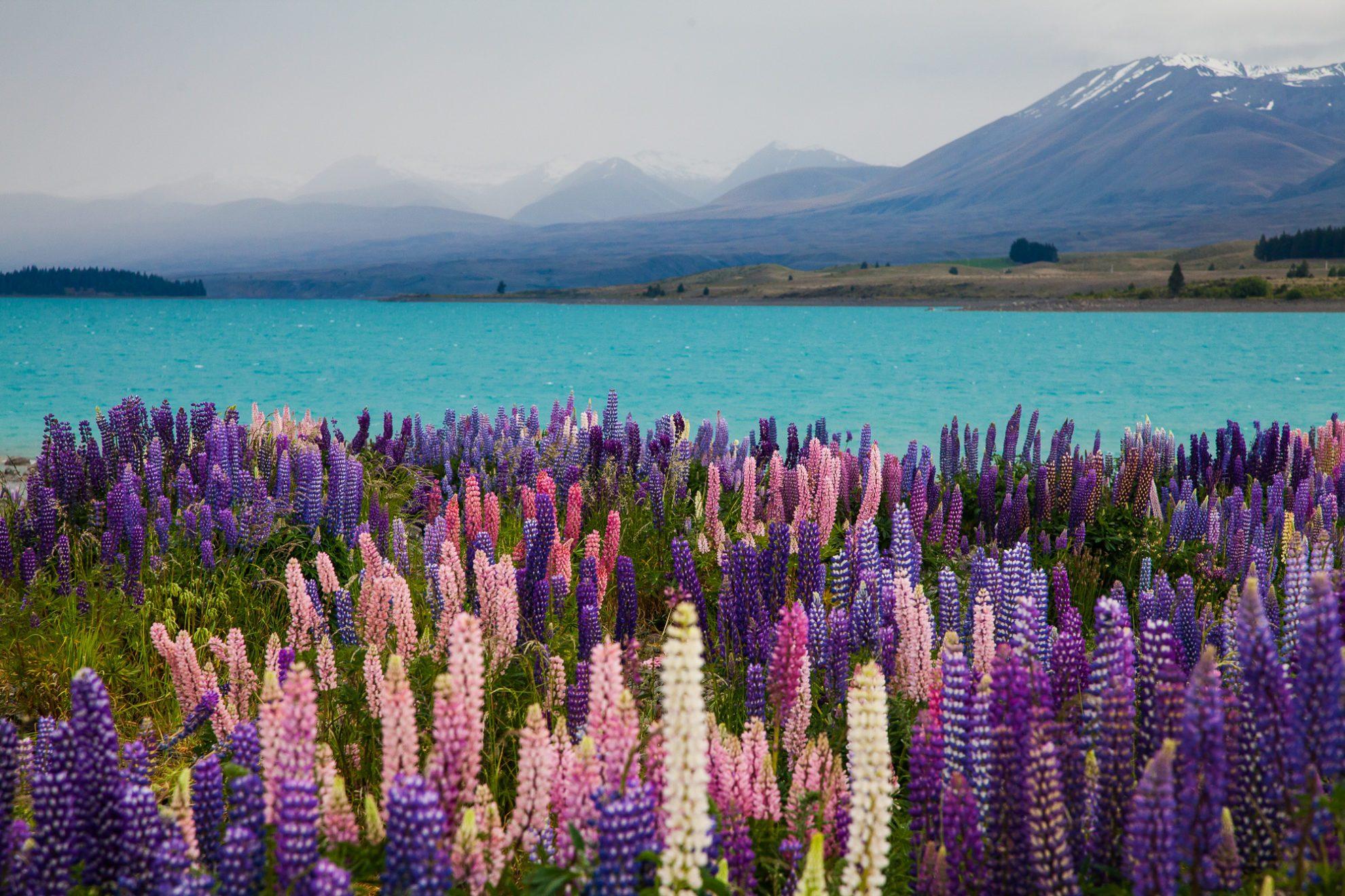 Озеро Пукаки в Новой Зеландии.