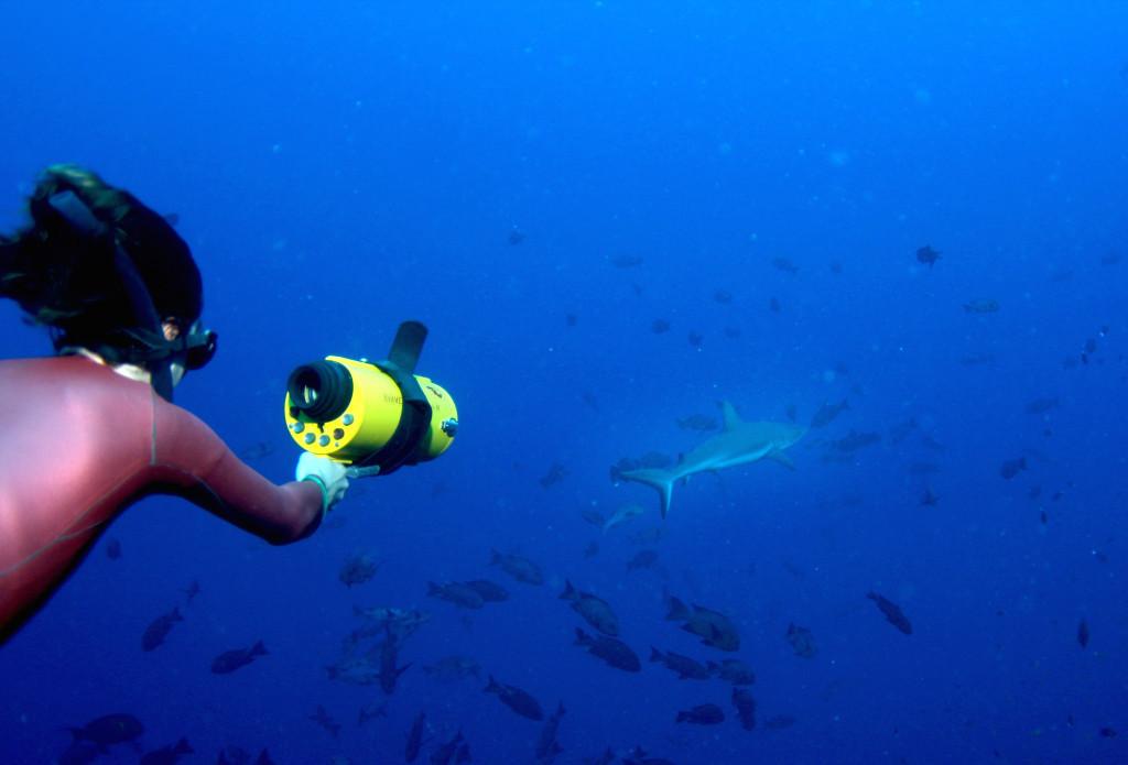 На хвосте у акулы