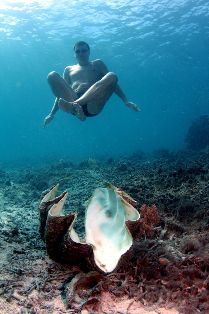 Огромные тридакны - ещё одно из чудес южных морей