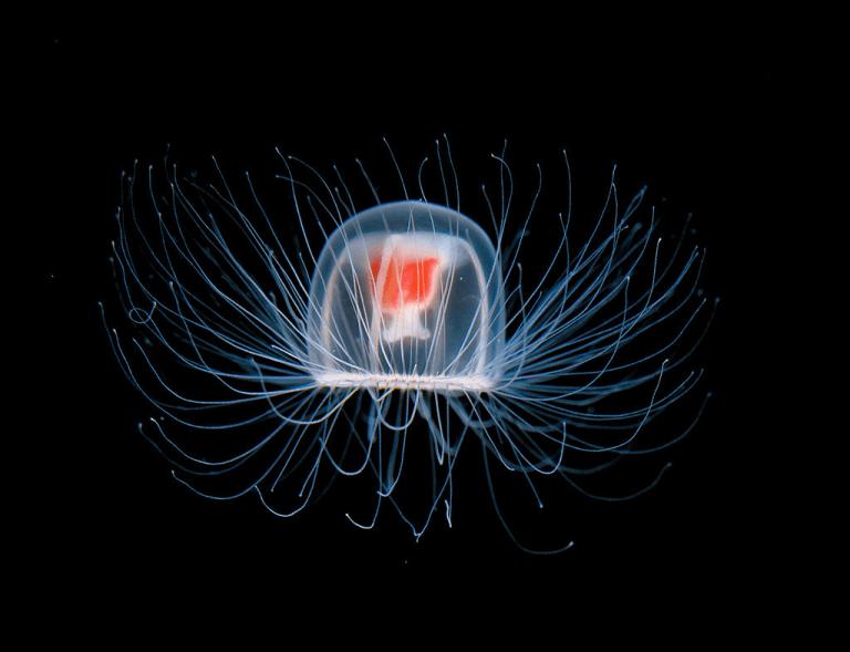 медуза2