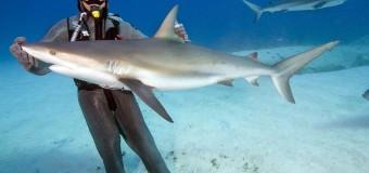 Cristina Zenato – повелительница акул