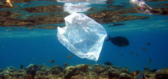 Из Мирового океана исчезли тонны мусора
