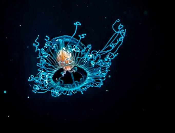 Удивительны подводный макромир Средиземного моря Ocean Media