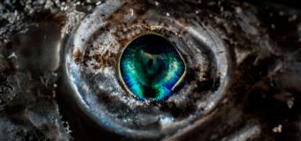 Удивительный подводный макромир Средиземного моря