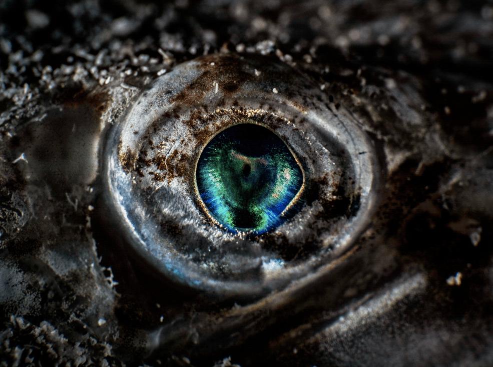 Удивительны подводный макромир Средиземного моря