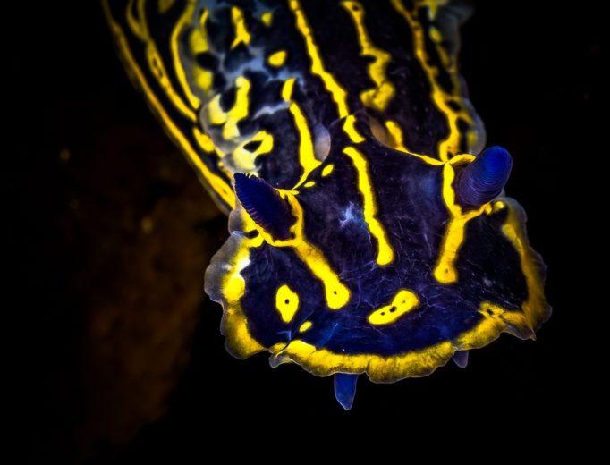 Удивительны подводУдивительны подводный макромир Средиземного моря Ocean Media