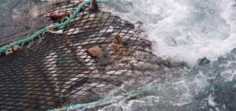 WWF и рыбаки будут вместе сохранять экосистемы Баренцева моря