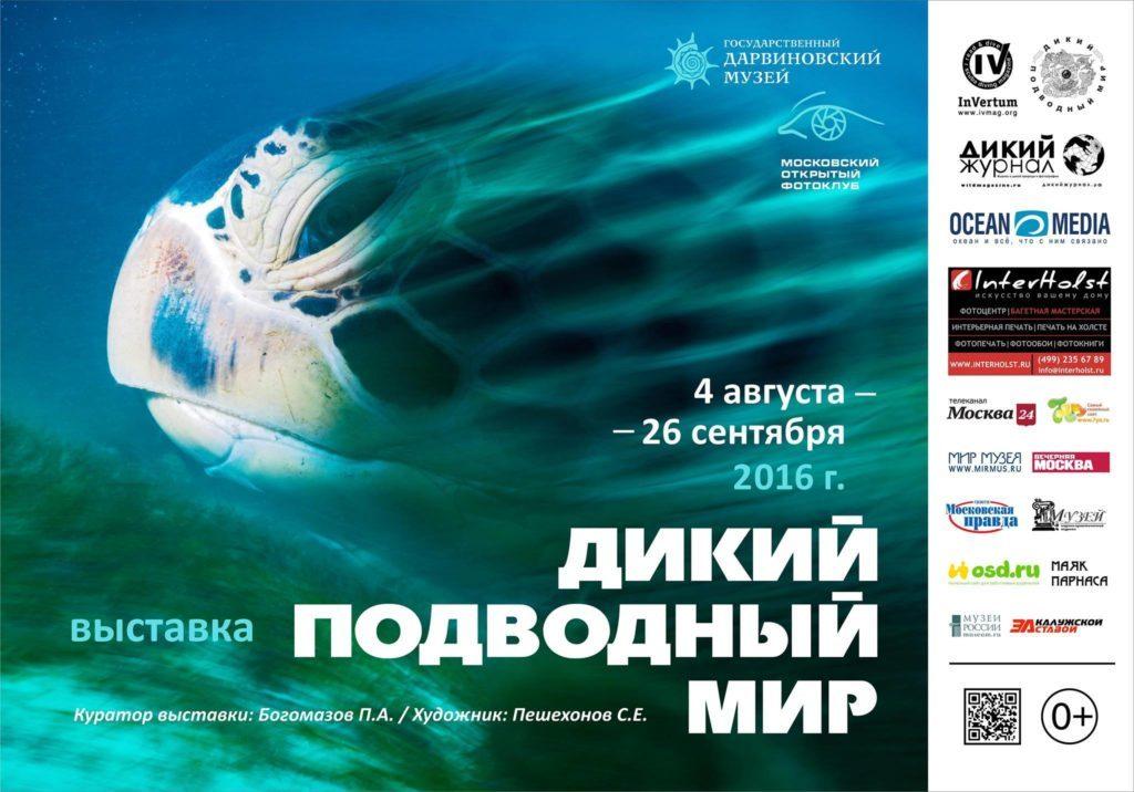 4 августа стартует фестиваль Фестиваль подводной фотографии «Дикий подводный мир».