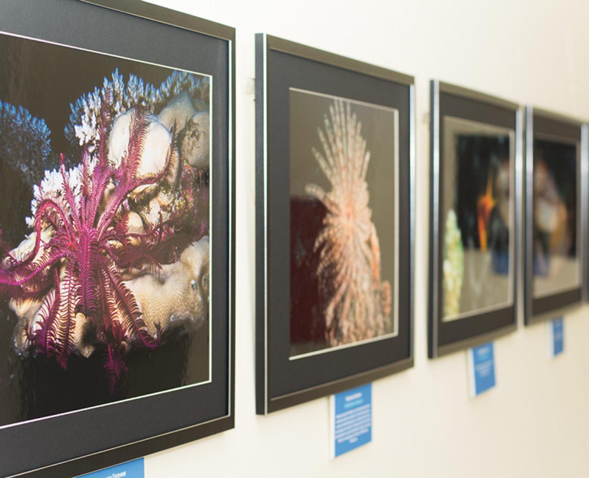 Выставка Дикий подводный мир