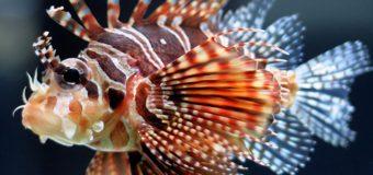 5 самых опасных для человека морских существ