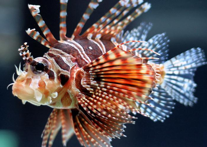 топ опасных морских существ