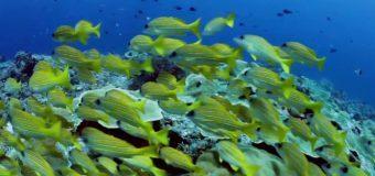 Что мы знаем об океанах (мини релакс)