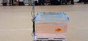 Студенты создали роботизированный аквариум