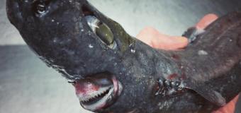 Очередные чудовища из инстаграма мурманского моряка