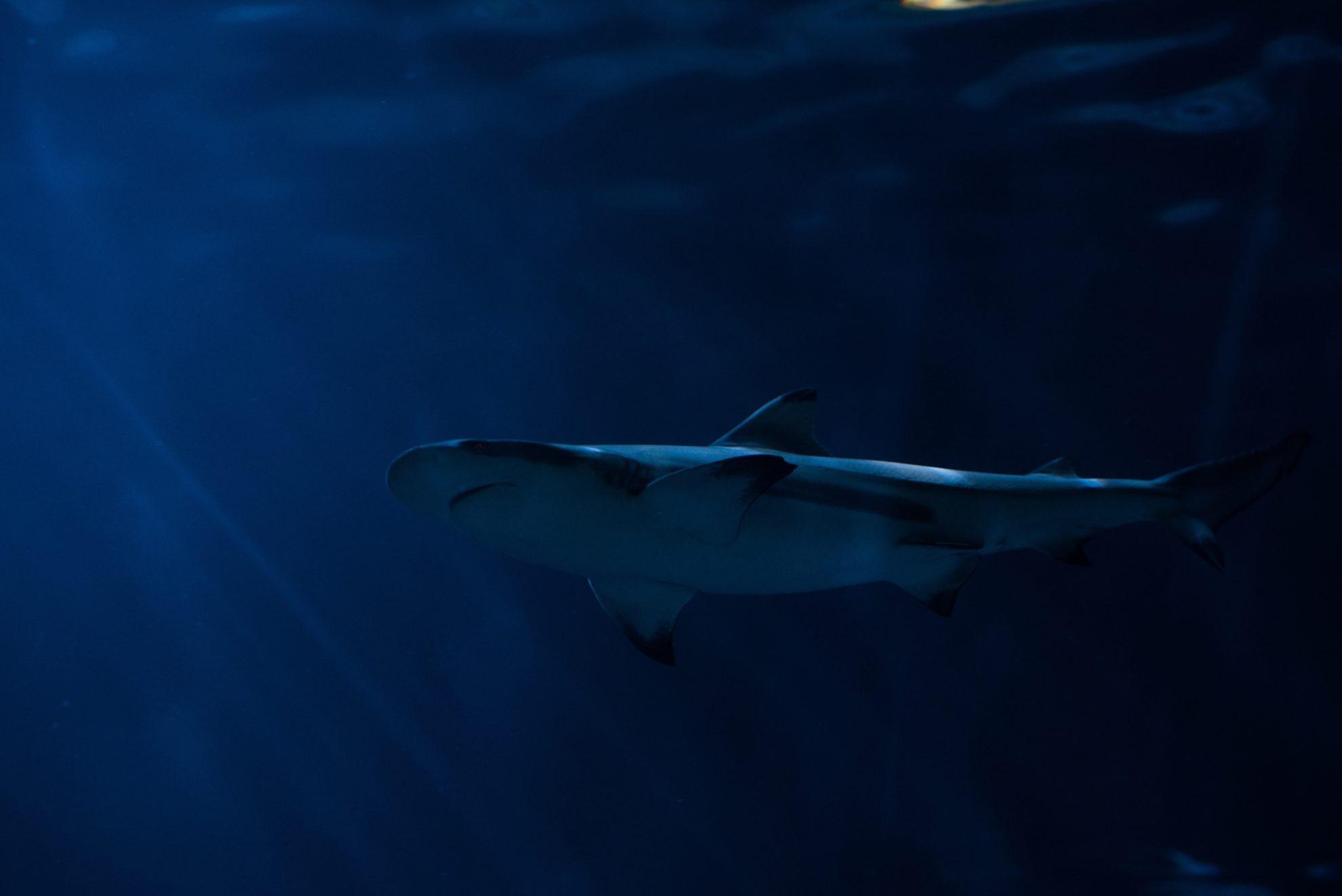 Почему акулы редко болеют раком