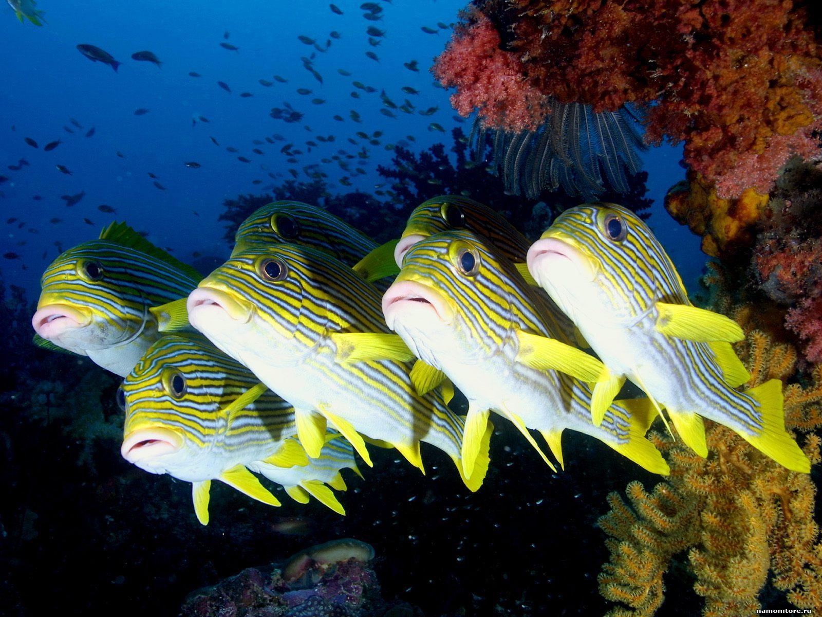 Лишение свободы за кормление рыбок в тайланде