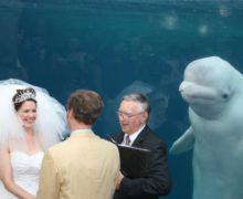Кит затмил невесту на свадебном фото