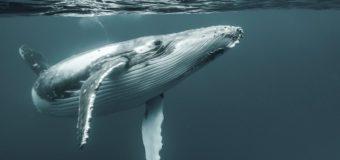 10 удивительных фактов о китах