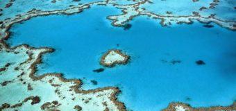 Две трети Большого Барьерного рифа обесцвечены