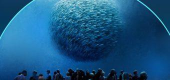 Океан без рыб
