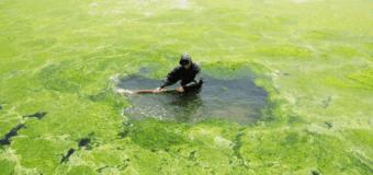 В Мировом океане все больше мертвых зон