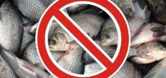 Весенний нерестовый запрет на рыбалку 2018 в Ярославле и Ярославской области