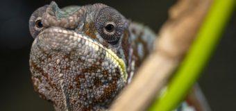 Рекордное количество новоселов появилось в «Тропическом дождевом лесу» Приморского океанариума