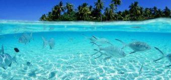 10 фактов об океане,которых вы не знали