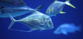 """В """"Океанской бездне"""" поселилась необычная рыба-философ"""