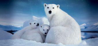В столице стартуют «Дни Арктики – 2018»