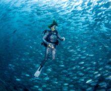 """""""Я родился в воде…"""" – выставка подводной фотографии откроется в Москве"""