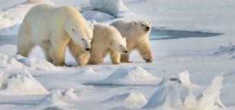 Ветер бора в Арктике
