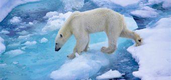 Приоритет – развитие Арктики