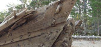 Эксперты изучили древний корабль на берегу Онежского озера