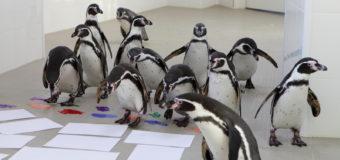 Пингвины рисуют