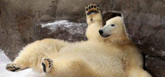 Московский зоопарк объявил фотоохоту